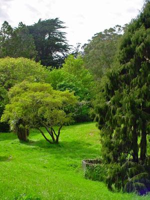 Drake Garden Remnants